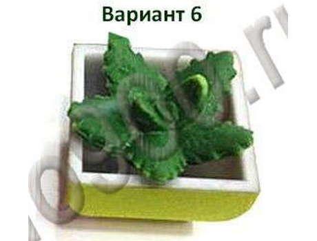 Кактус растущий от воды